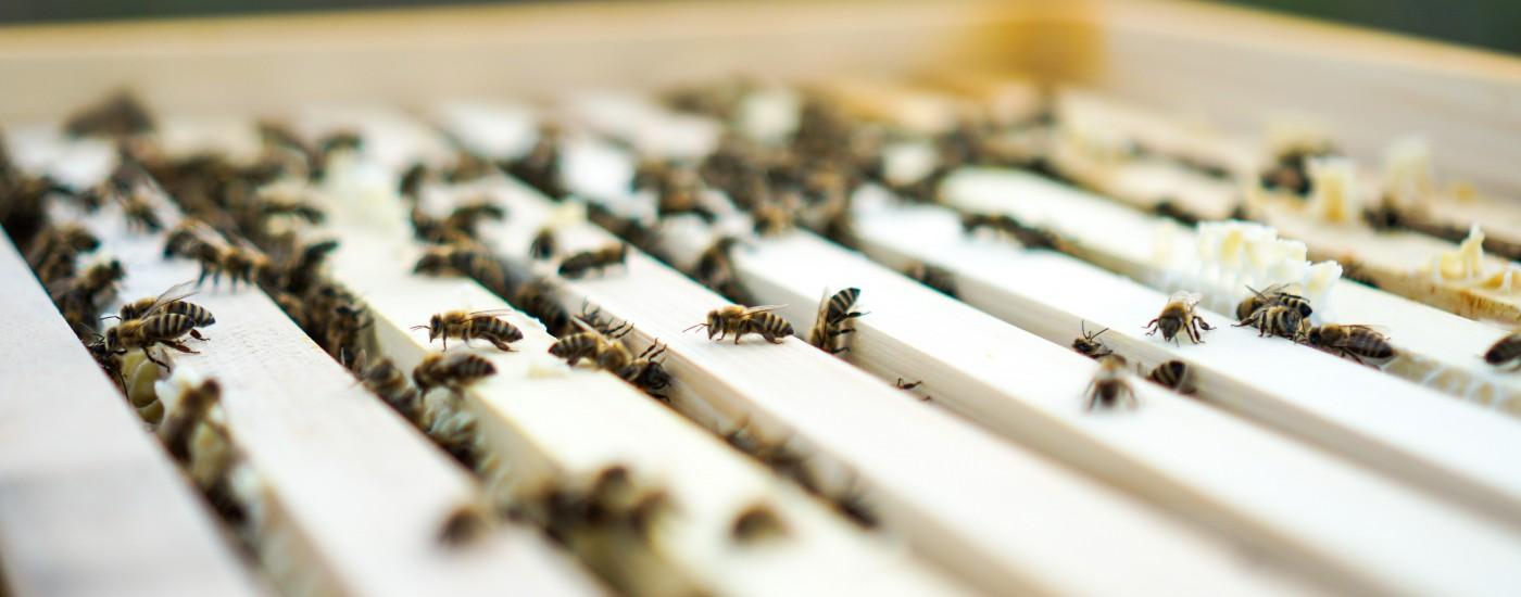 Bienen_Hofladen