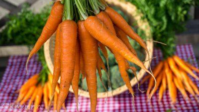 Junge Karotten