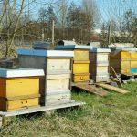 Bienen6