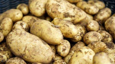 Neue Kartoffeln aus eigenem Anbau