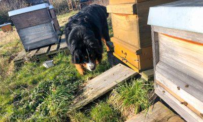 Lea und die Bienen