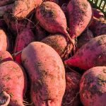 Suesskartoffeln_1